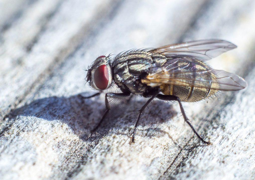 signs of insect infestation