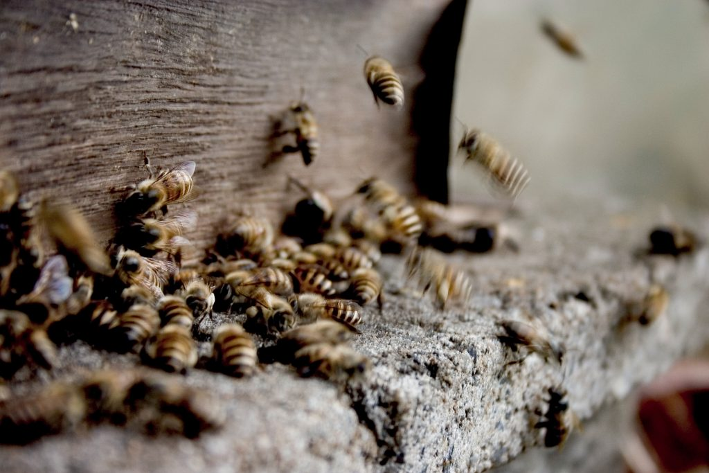 What does a wasp nest look like? pest defence